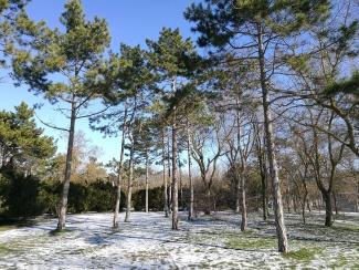 снег и сосныв курзале