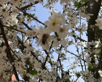 пчела на цветке (увелич)